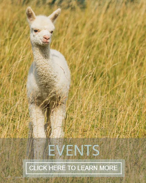 Meet the alpacas at one of our popular workshops